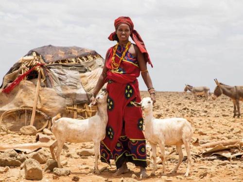 Goat herding in Burgabo, Marsabit county, northern Kenya. Christian Aid/Elaine Duigenan